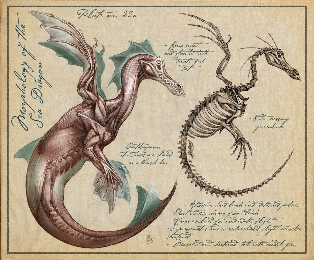 Схема строения дракона