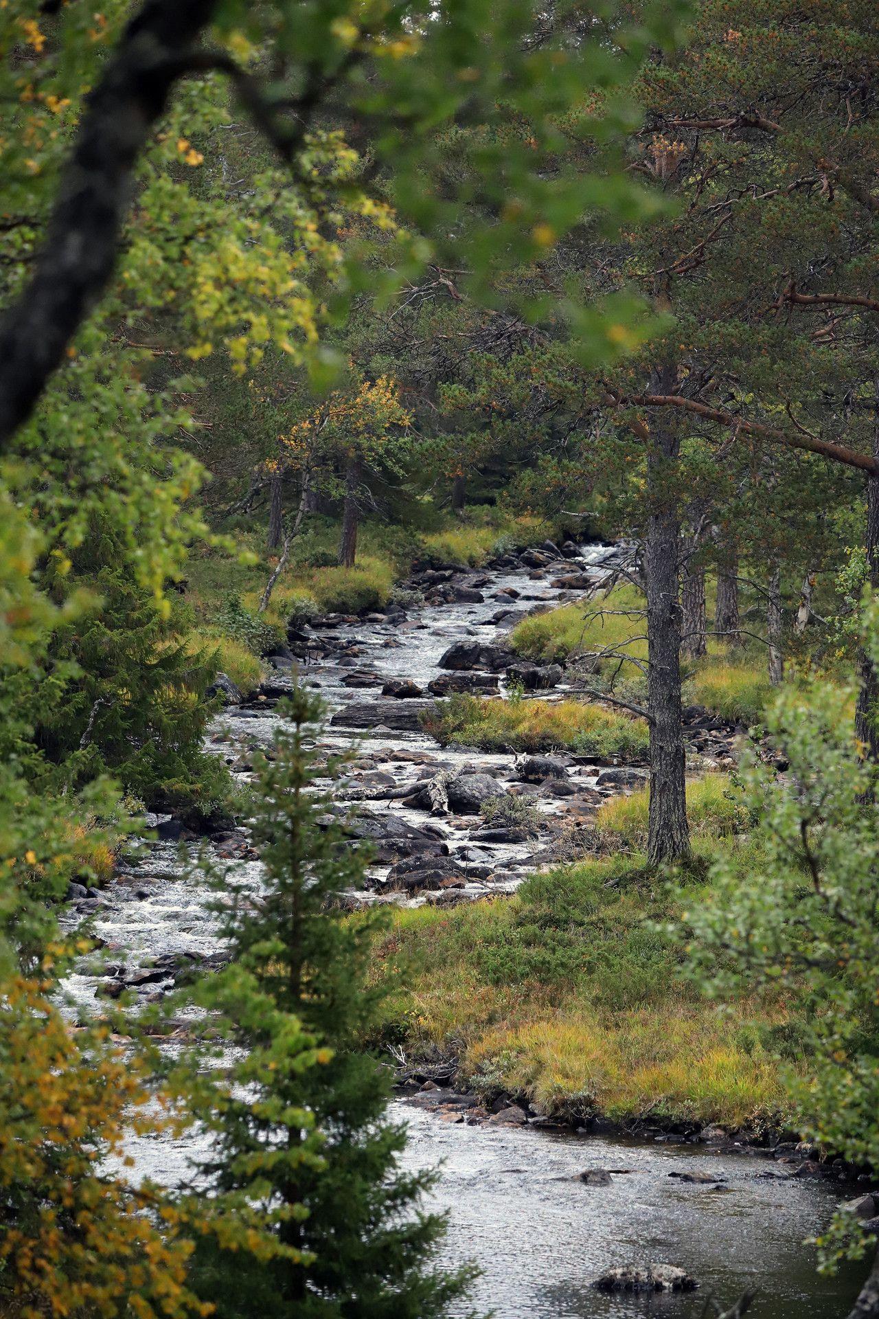 Valadalen In Jamtland Sweden Jamtland Sweden River Stream Nature Landscape Forest Landscape Nature Landscape Drawings
