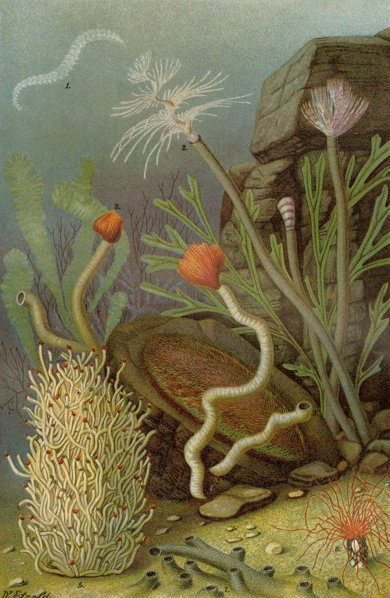 Sea Worms Ocean Life Print Antique C 1894 Marine Sea Beach House