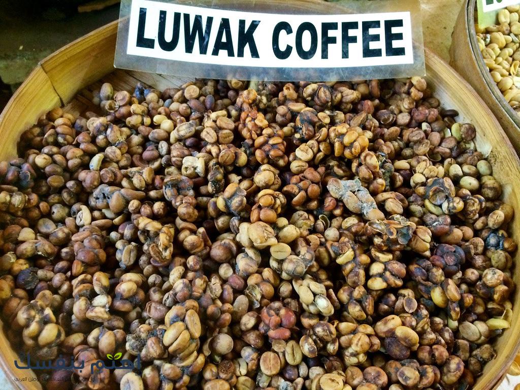 قهوة كوبي لواك في اندونيسيا أغلى قهوة في العالم In 2020 Most Expensive Food Kopi Luwak Coffee Expensive Coffee
