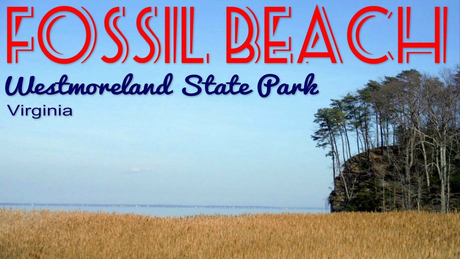 Hike To Fossil Beach At Westmoreland State Park Near