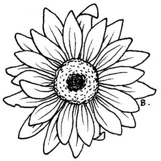 Sunflower Gerbera With Images Flower Coloring Pages