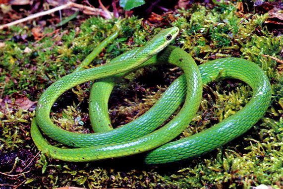 How To Prevent And Control Snake Infestations Around Your Home And