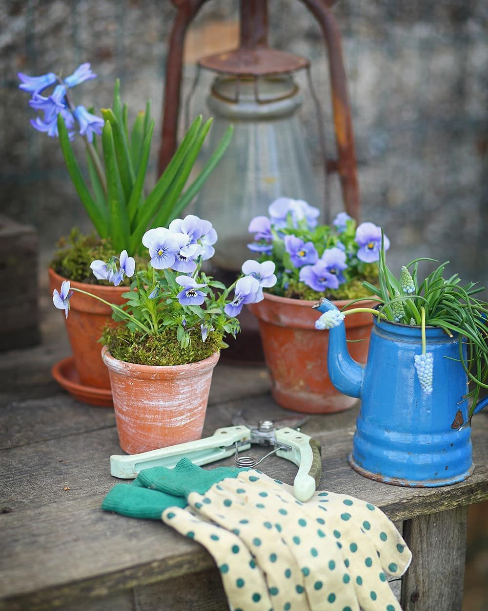 Ideas for Gardening with Pansies that You Will Love
