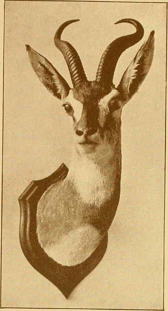 """Image from page 290 of """"Records of big game : with their distribution, characteristics, dimensions, weights, and horn & tusk measurements"""" (..."""