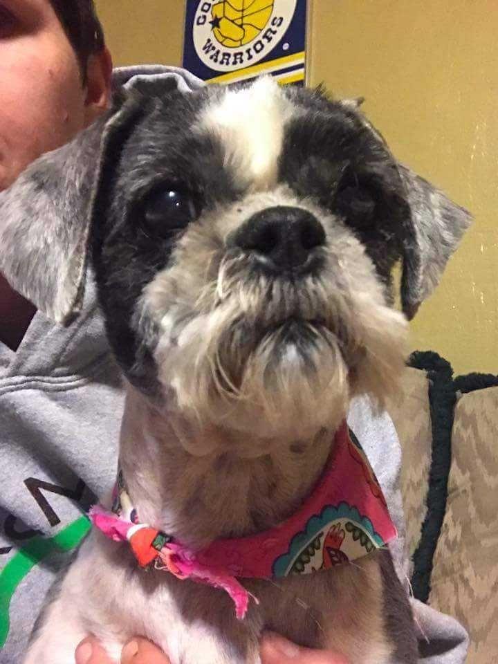 Shih Tzu Dog For Adoption In Glen Haven Wi Adn 524256 On