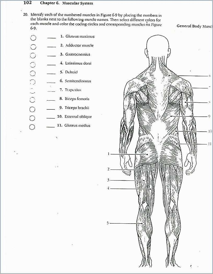 Anatomy And Physiology Coloring Workbook Chapter 10 Anatomy And Physiology Anatomy Coloring Book Human Anatomy And Physiology