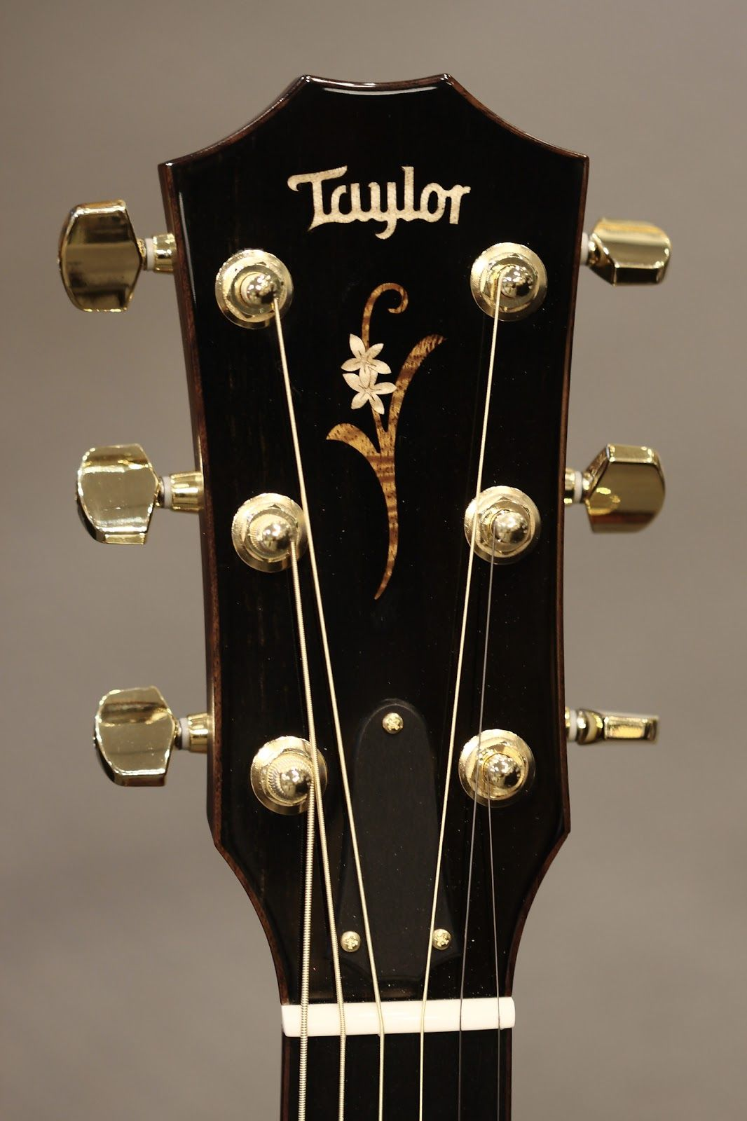 Taylor Headstock Guitar Acoustic Guitar Chords Acoustic Guitar Art