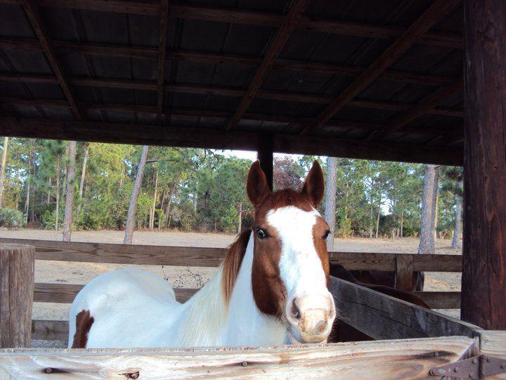 A friend's horse