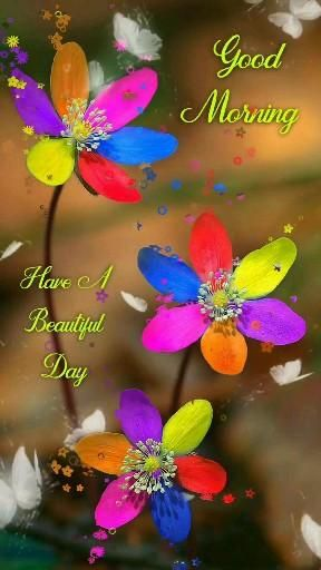 Lovely Good Morning Colourful Flowers Video, Good Morning, Flowers