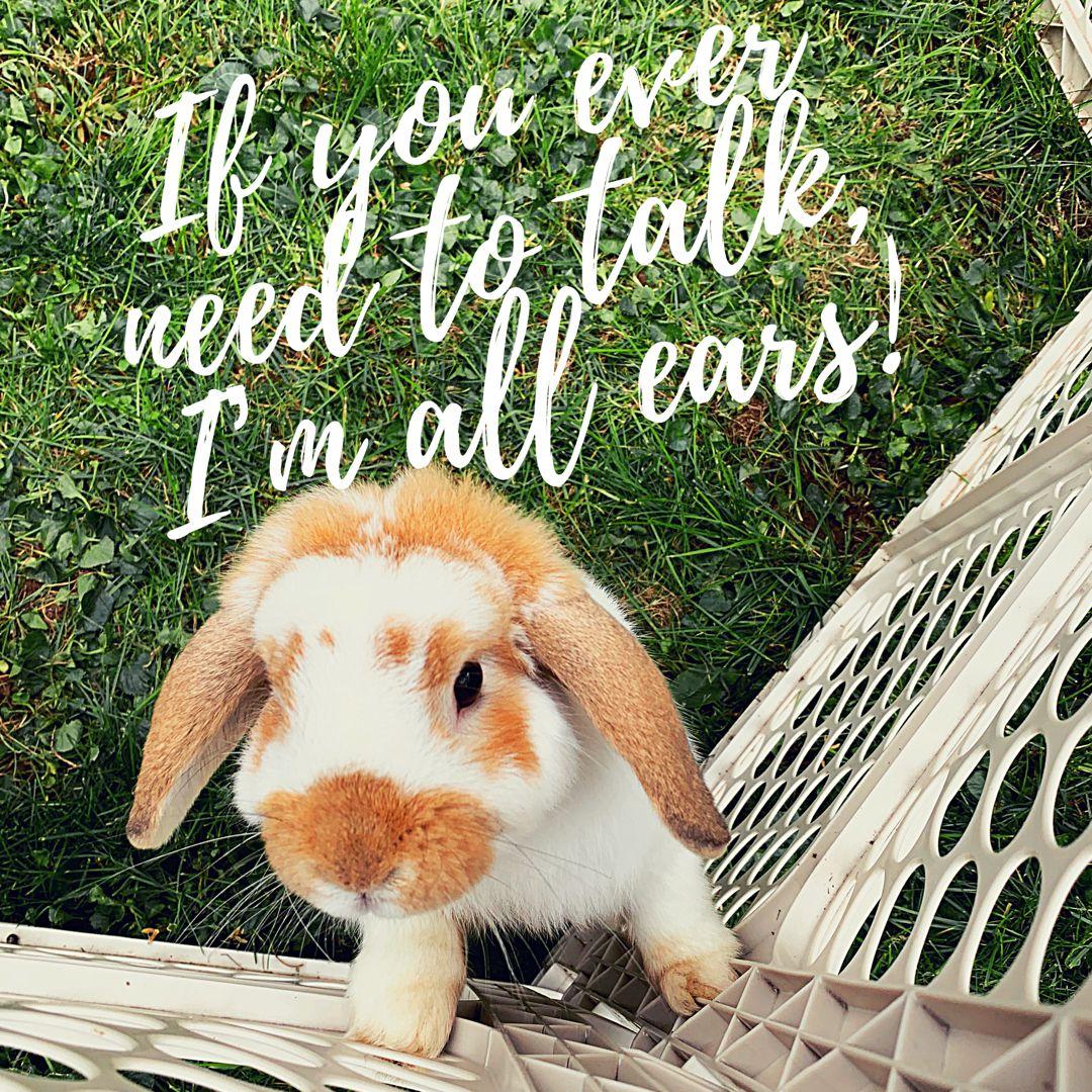 Lop Rabbit   Animal quotes, Funny rabbit, Rabbit