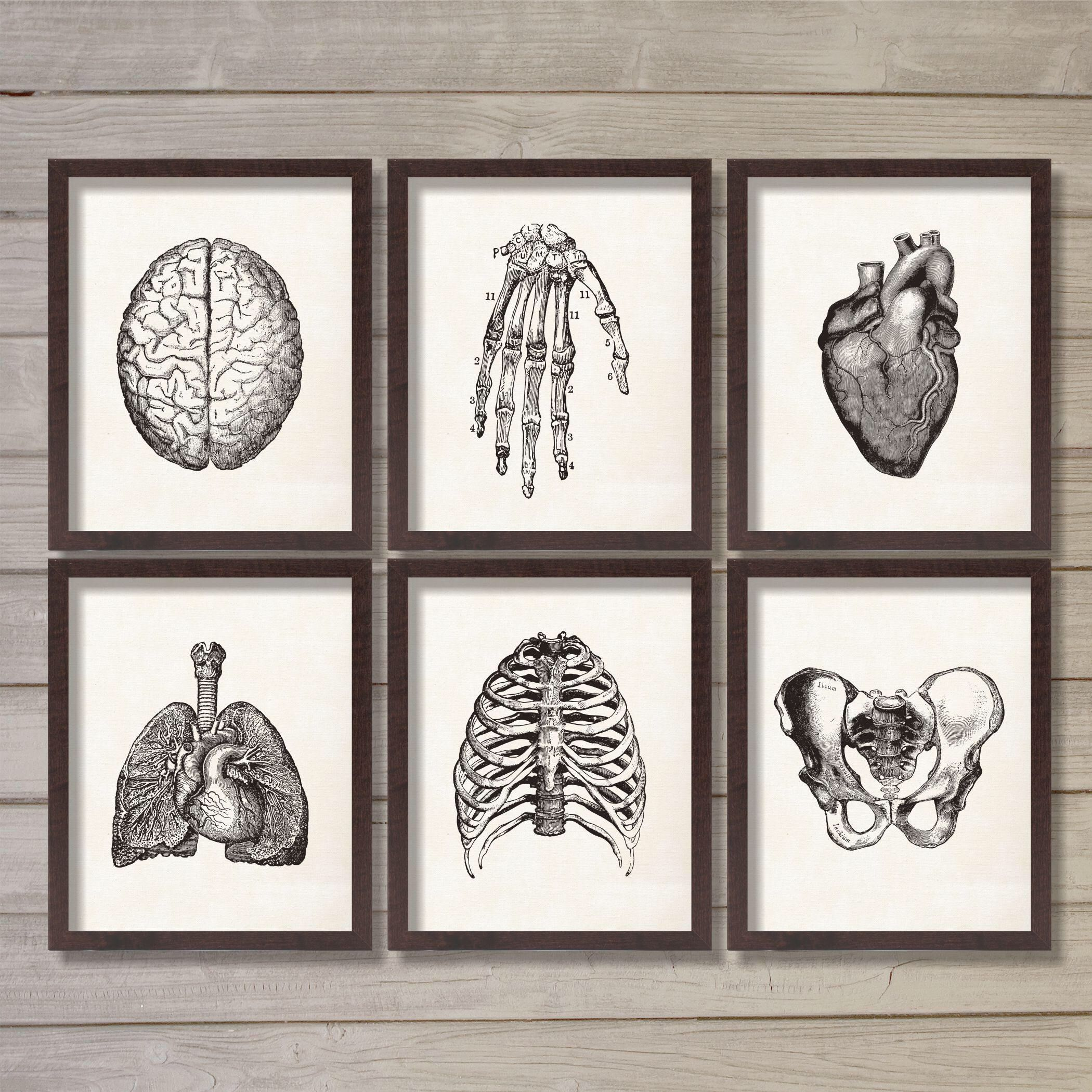 Human Anatomy Vintage Instant Download Printable Wall Art Etsy Medical Office Decor Doctors Office Decor Printable Wall Art