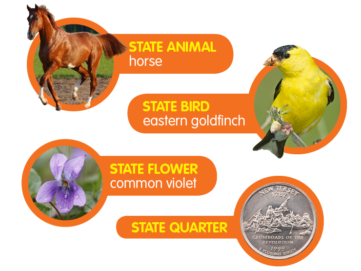 Nj Facts State Birds New Jersey