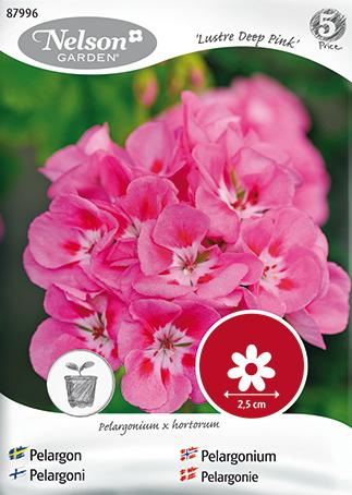 Romanttinen pelargoni, joka kukkii runsaasti. Kukat ovat syvän roosansävyiset ja lehdet tummat. Sopii parvekkeelle tai kauniiseen ruukkuun terassille. Poista kuihtuneet kukat.