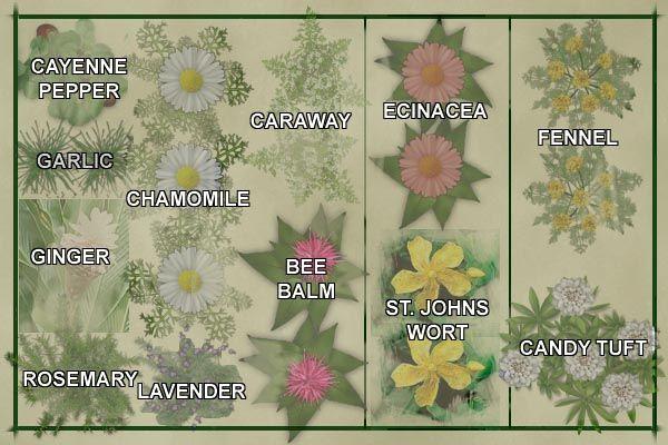 Millie Says Make An Herb Garden Outdoor Herb Garden Herb Garden Design Medicinal Herbs Garden
