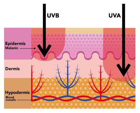 uv-penetration-vitamin-d
