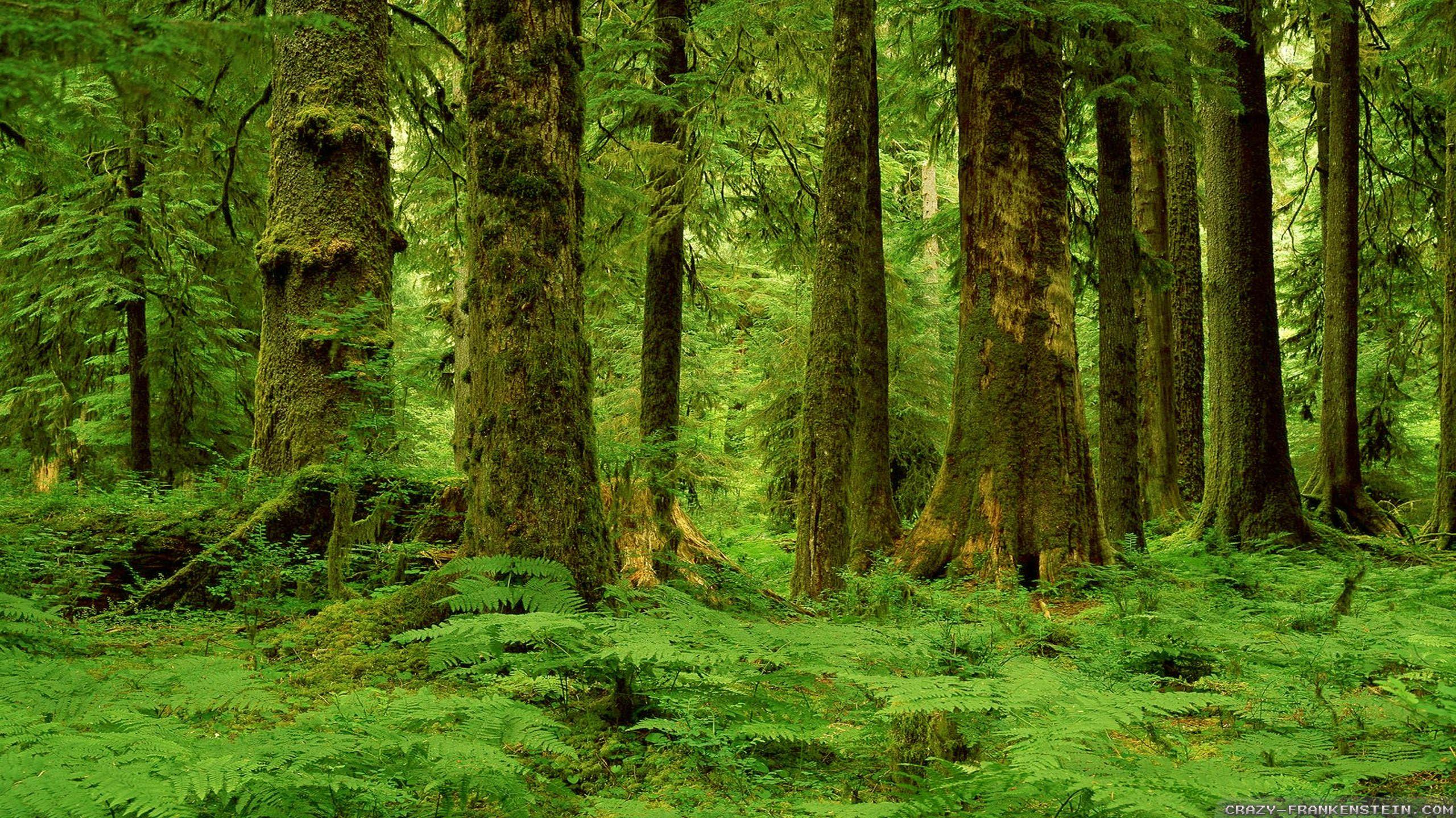 Forest Wallpaper Widescreen Wallpaper Forest Wallpaper Tree Wallpaper Desktop Background Nature