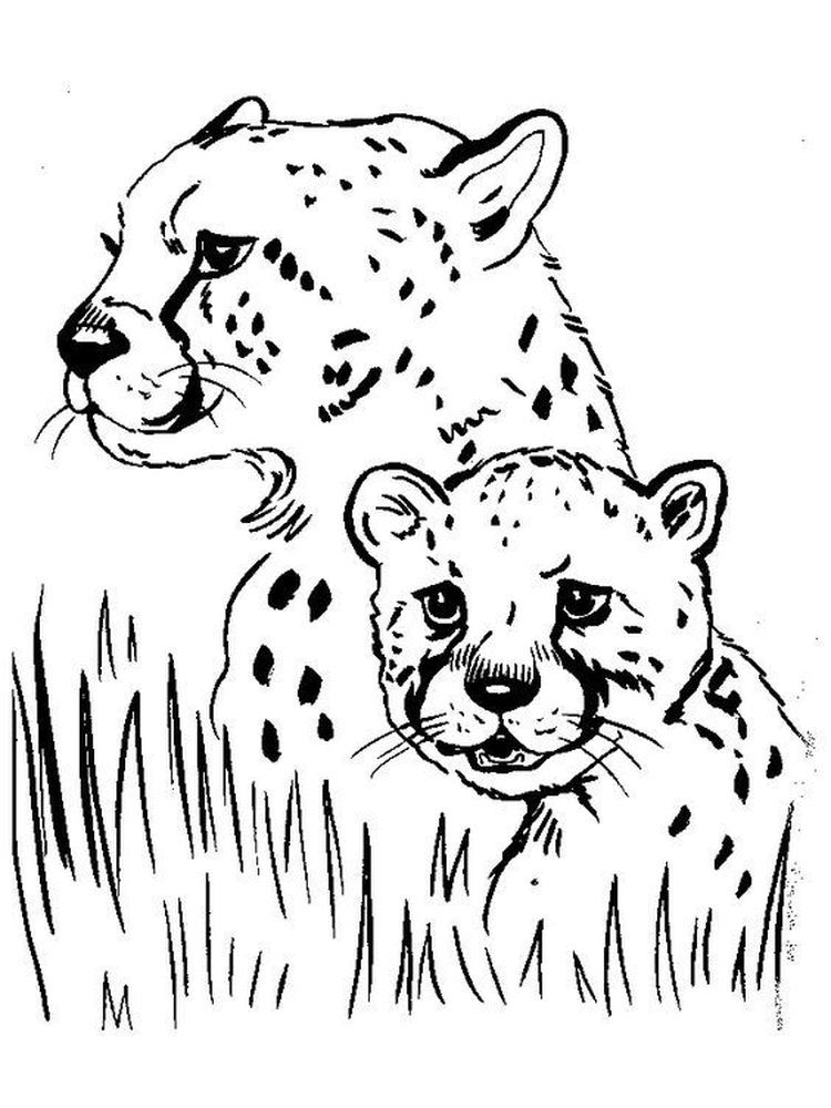 Cheetah Coloring Pages Printable Pdf Below Is A Collection Of Cheetah Coloring Page W Animal Coloring Pages Coloring Pictures Of Animals Animal Coloring Books