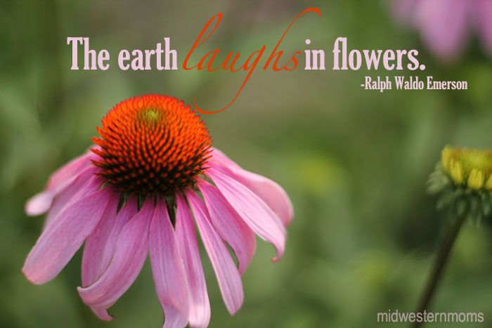beautiful flowers in the midwest quotes photography