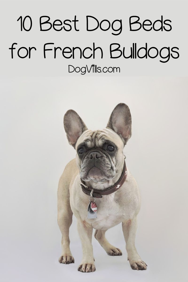 Top 10 Best Dog Beds For French Bulldogs Cool Dog Beds Dog Bed