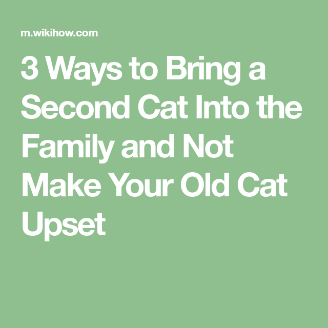 3 Ways to Bring a Second Cat Into the Family and Not Make Your Old Cat Upset