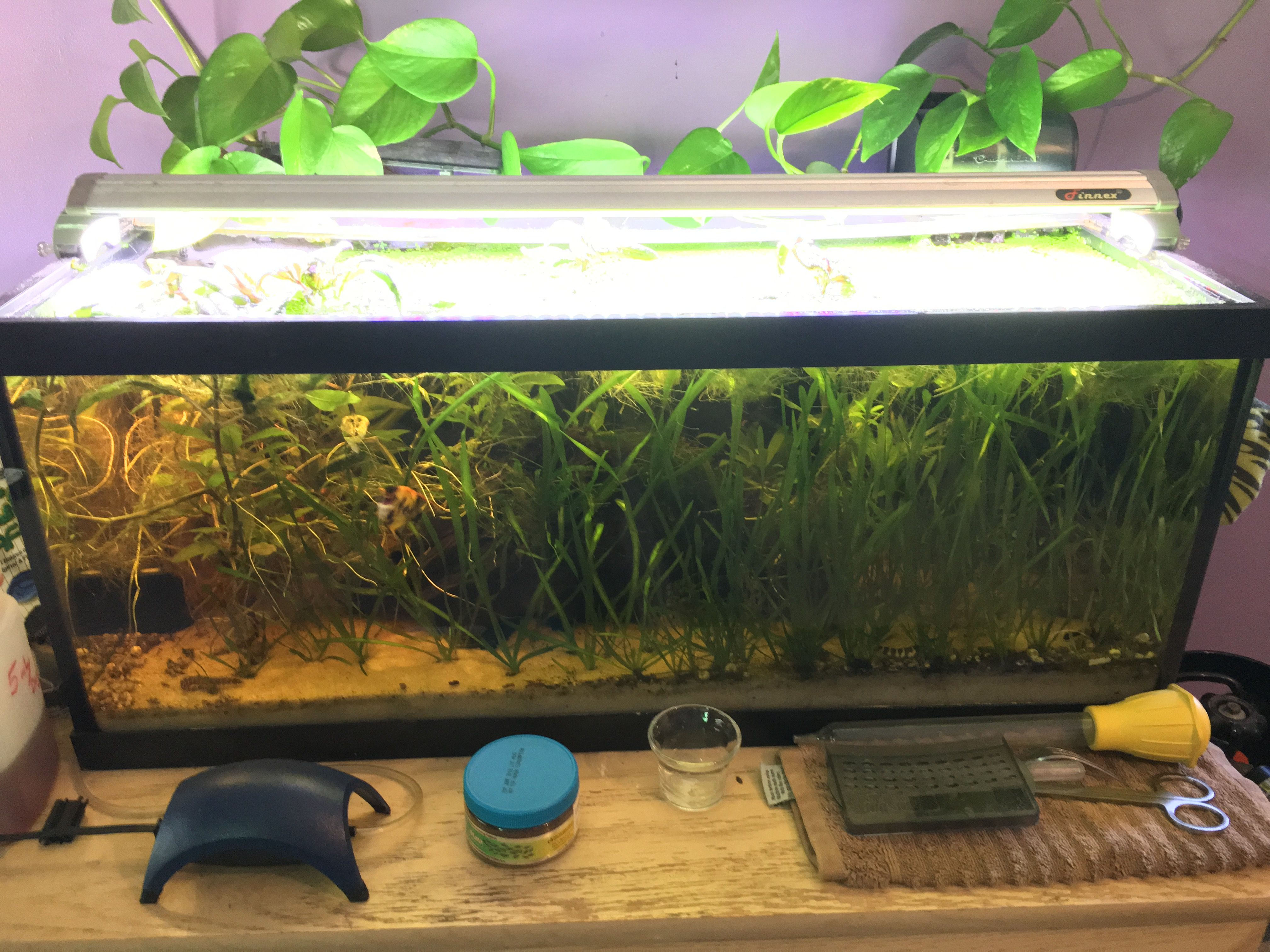 Decided it was time to rip up a bunch of plants aquariums