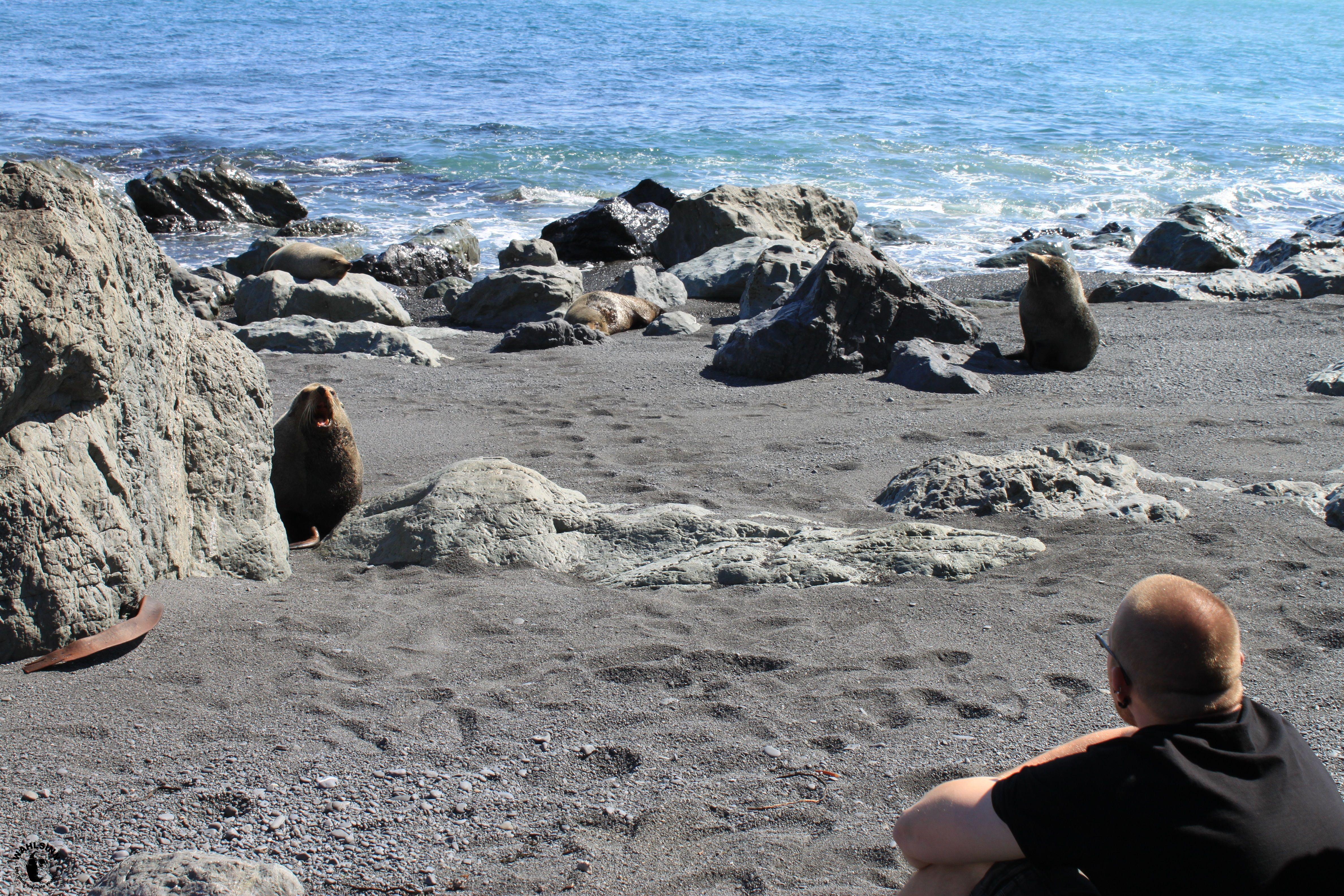 """""""Ey man, was geht bei dir?"""" - Robbe (Gespräch auf Neuseelands Nordinsel)"""