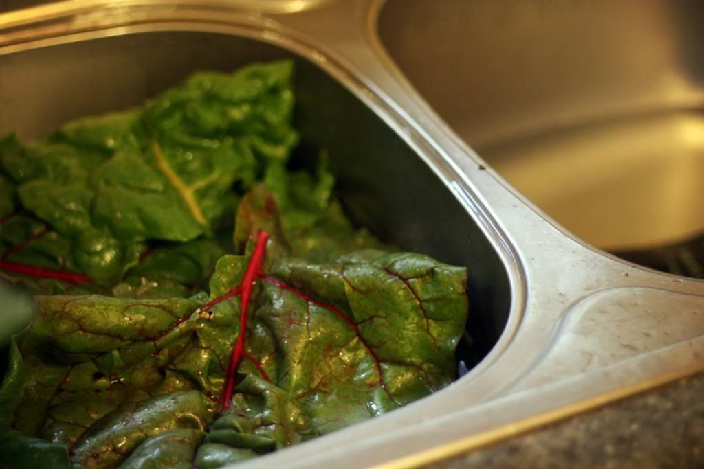 How to Freeze Greens Collards, Mustard, Spinach, Swiss
