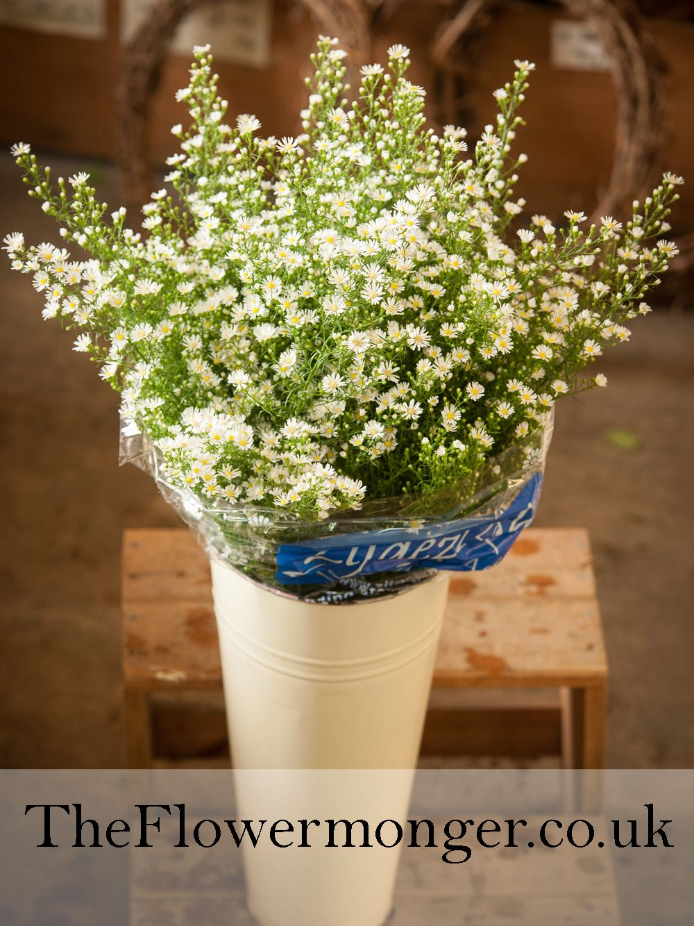 White september flower available in bunches of 5 stems from the white september flower available in bunches of 5 stems from the flowermonger the wholesale floral home delivery service picture shows is 25 stems mightylinksfo