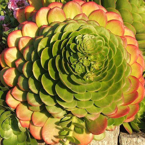 Propagate Succulent Plant Cuttings