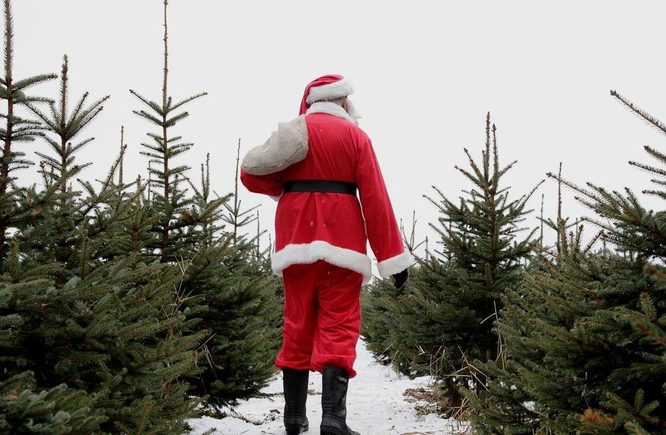 What\u0027s the most environmentally friendly Christmas tree you can get