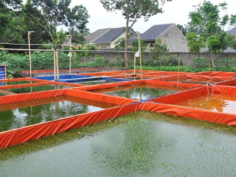 Persiapan Kolam Terpal Image Kolam Ikan Air Tawar Air Tawar