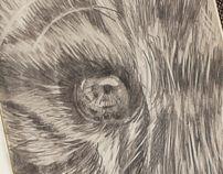 Tiger Eye sketch by Irina Titova, via Behance