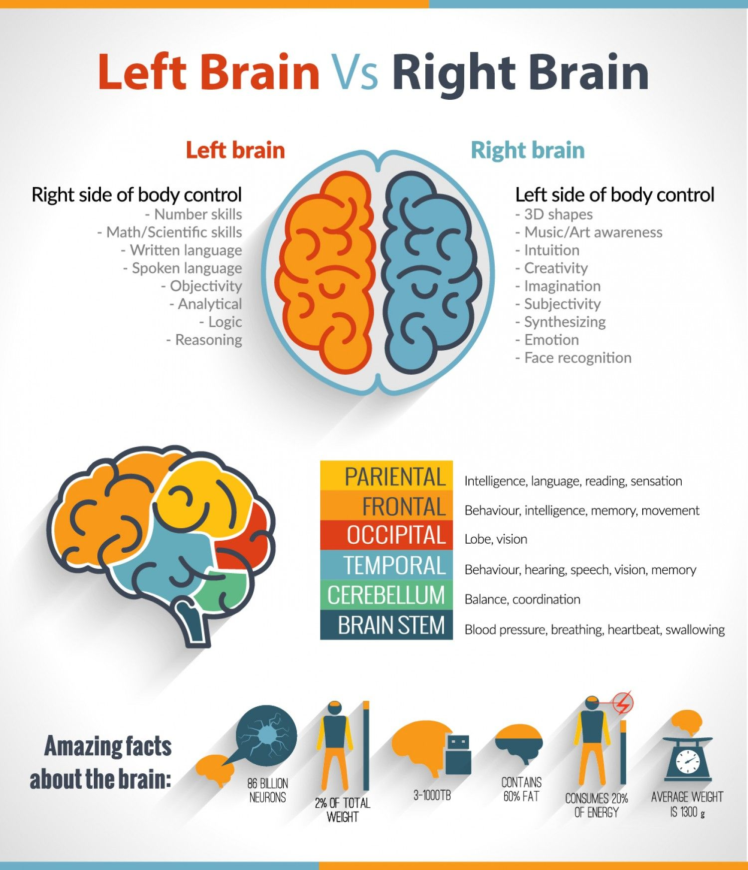 The Left Brain Vs Right Brain Confusion Infographic With