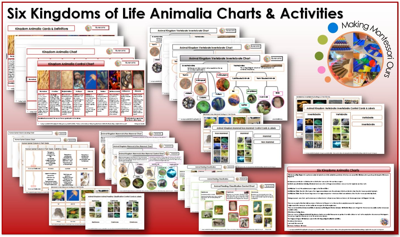 Six Kingdoms Animalia Charts Materials And Labels Printable Package Animal Kingdom Classification Chart Kingdom Animalia Educational Printables [ 861 x 1453 Pixel ]