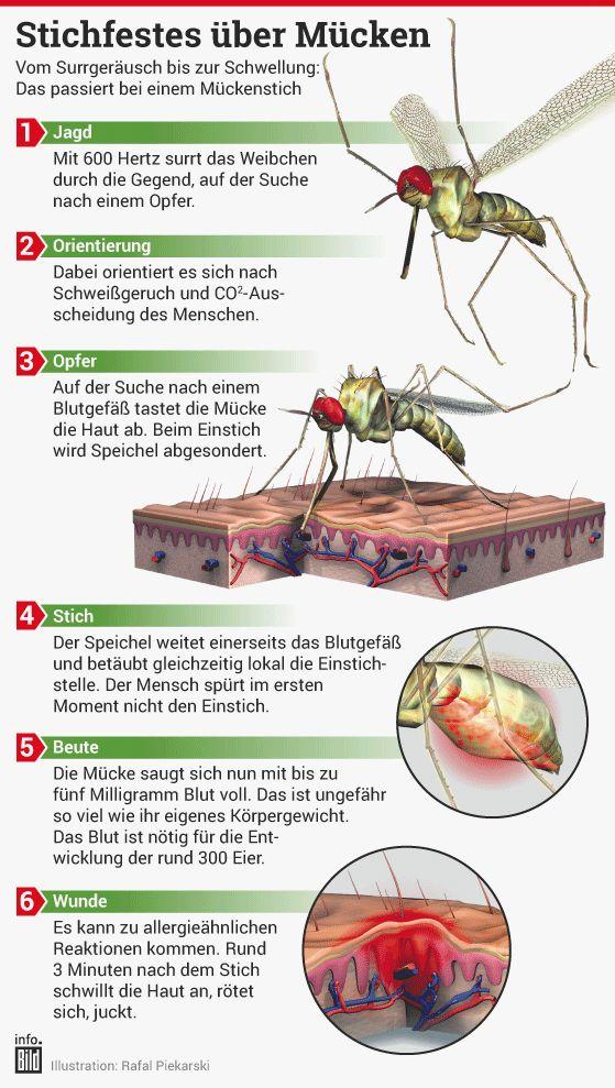 Großartig Honigbiene Anatomie Bilder Galerie - Anatomie Von ...