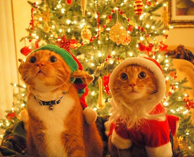 Weihnachtsgedichte kurz tiere