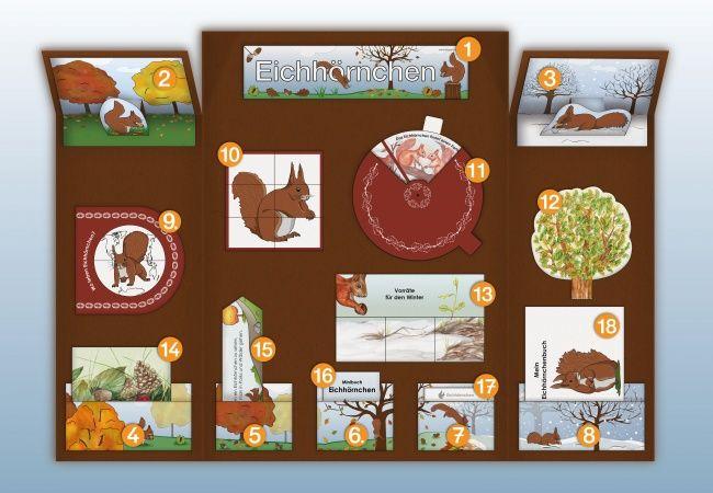 De Eichhoernchen Lapbook Innen Kigaportal Kindergarten Grundschule Herbst Tiere Kindergartenthemen Grundschule Unterrichtsmaterial Grundschule