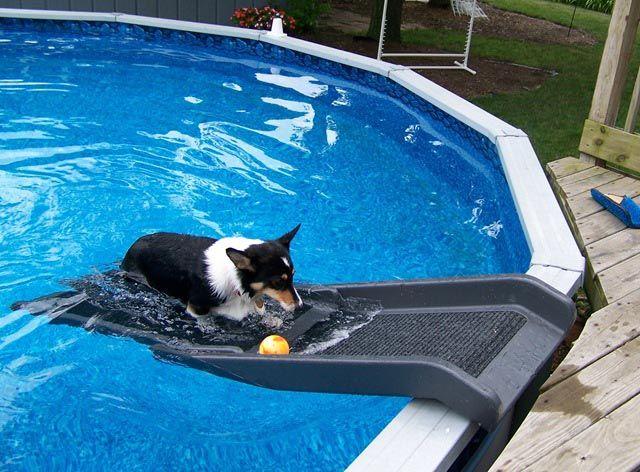 Dog Backyard Pool Slide Backyard Design Ideas Dog Pool Dog Backyard Dog Pool Diy
