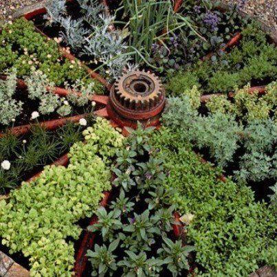 A raised herb garden in an old wagon wheel!