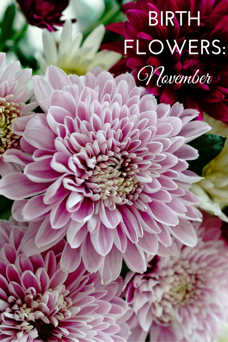 birth flowers november chrysanthemums birth month