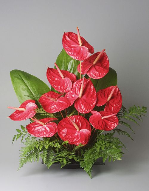 Create your own beautiful bouquet with freshly cut heart-shaped anthurium flowers, Hawaiian fern, and ti leaves. Each order includes 10 anthuriums, 3 ti leaves, and a small bunch of ferns.