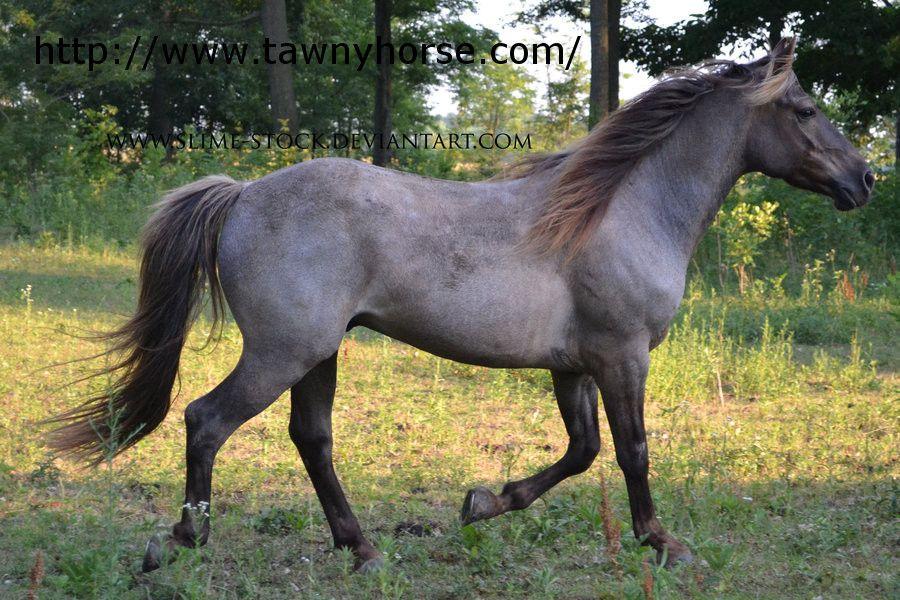 Silver black roan horse