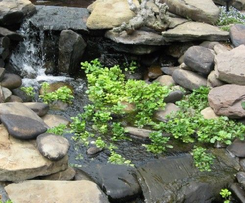 Growing pond plants without soil it really works we re for Garden pond without fish