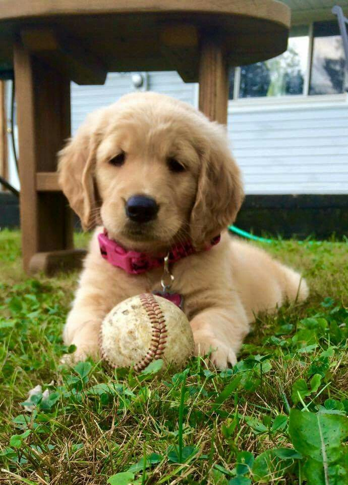 This Baby Is Ready For Baseball To Start T Dogs Golden
