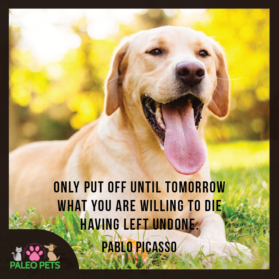 Inspirational Pet Quotes: Happy Monday #Pet Lovers ️ #Dogs #Pets #Quotes #Motivation