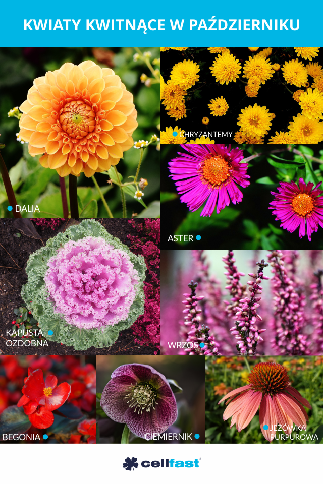 Niedlugo Pazdziernik Zobacz Jakie Kwiaty Kwitna W Ten Miesiac Flowers Plants Dandelion