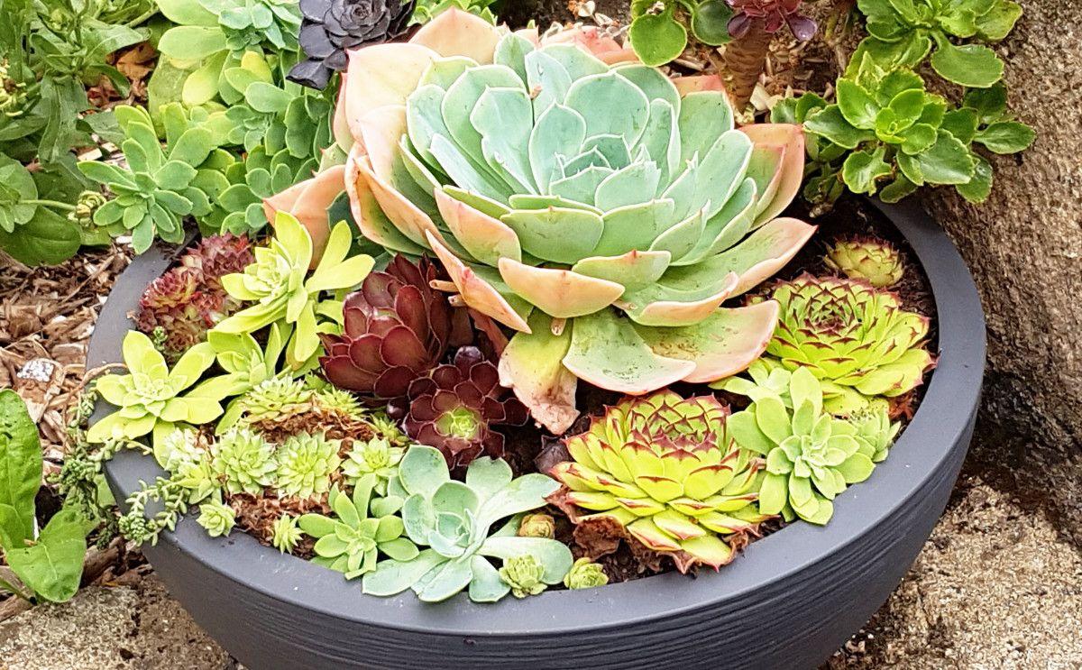 Plante Grasse Realiser Une Composition De Succulentes Avec