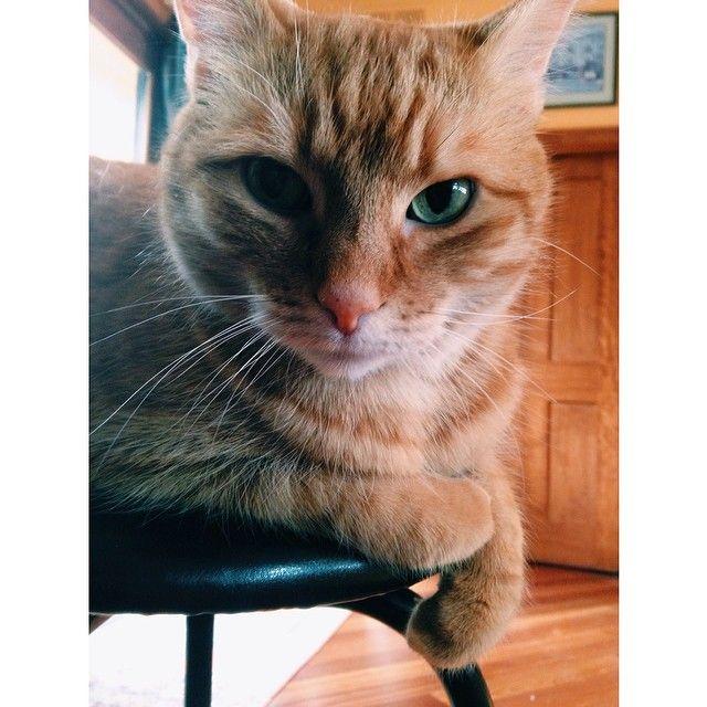 Happy cat. #Padgram