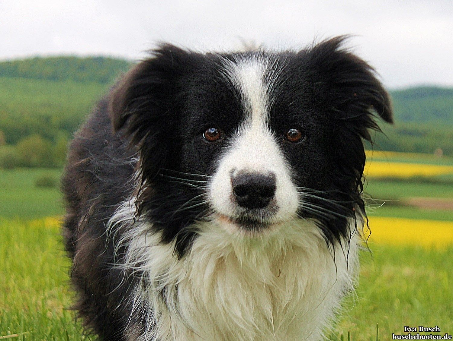 Pin By Soosyn On Animal Smiles Border Collie Best Dogs Collie